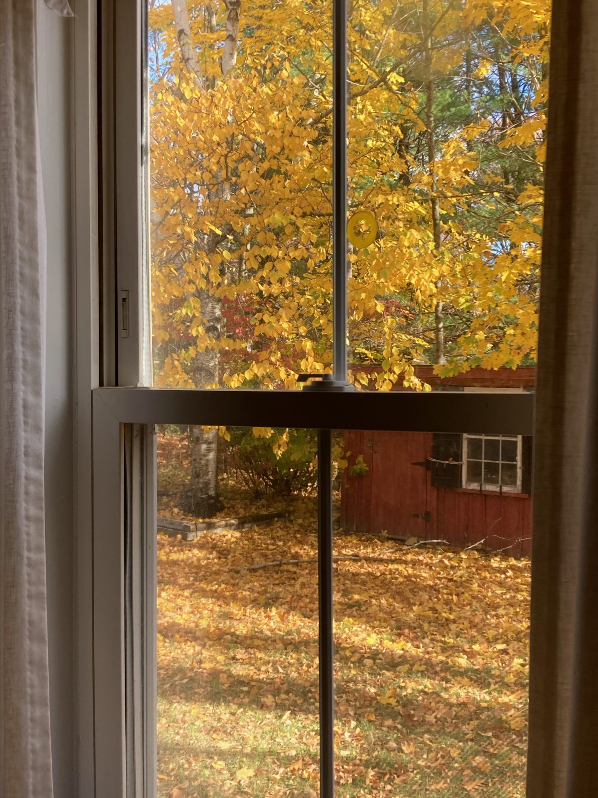 Golden leaves hang from trees and blanket the ground in this photo. A brick red shed is visible, as is the window pane of the window being looked through.